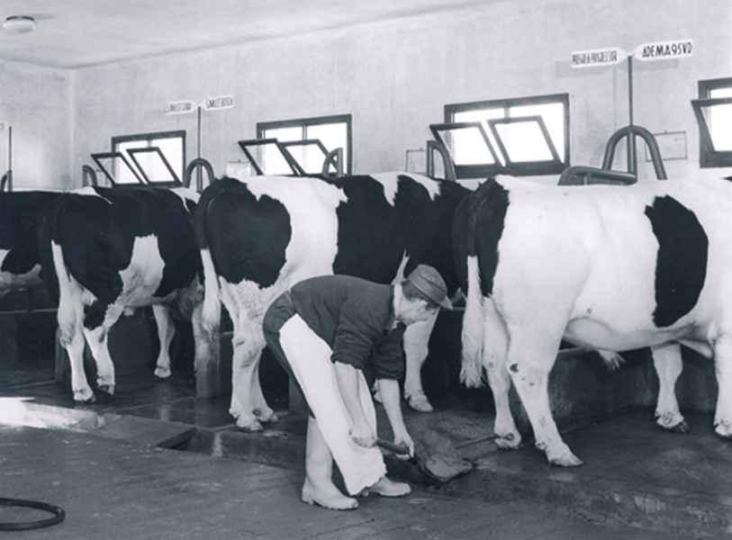 Centro de inseminación artificial de vacuno. Betanzos (A Coruña), 1965